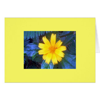 Flowers of Costa Rica 02 Card