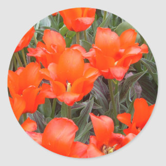 """""""Flowers of Spring""""  CricketDiane Art Photography Classic Round Sticker"""