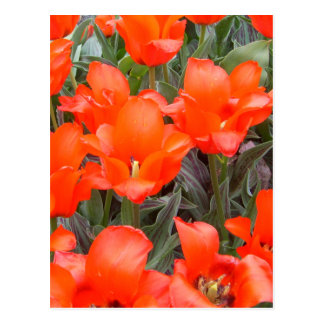 """Flowers of Spring""  CricketDiane Art Photography Postcard"