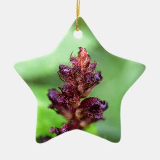 Flowers of the broomrape Orobanche gracilis Ceramic Ornament
