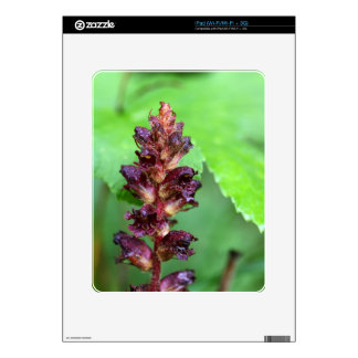 Flowers of the broomrape Orobanche gracilis Decal For iPad