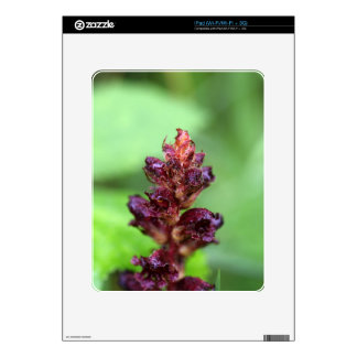 Flowers of the broomrape Orobanche gracilis Decals For iPad