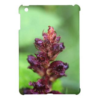 Flowers of the broomrape Orobanche gracilis iPad Mini Cover