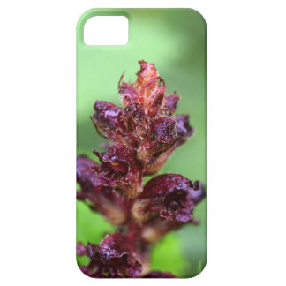 Flowers of the broomrape Orobanche gracilis iPhone SE/5/5s Case