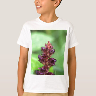 Flowers of the broomrape Orobanche gracilis T-Shirt