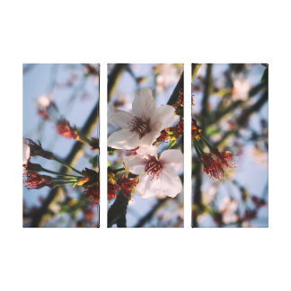 Flowers of the cherry blossoms on a spring day canvas print