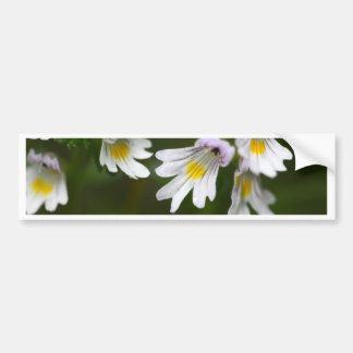 Flowers of the Eyebright Euphrasia rostkoviana Bumper Sticker