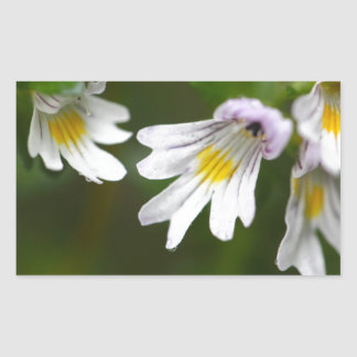 Flowers of the Eyebright Euphrasia rostkoviana Rectangular Sticker