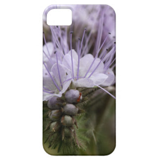 Flowers of the lacy phacelia iPhone SE/5/5s case
