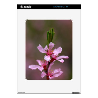 Flowers of the Russian Almond Tree iPad Decal