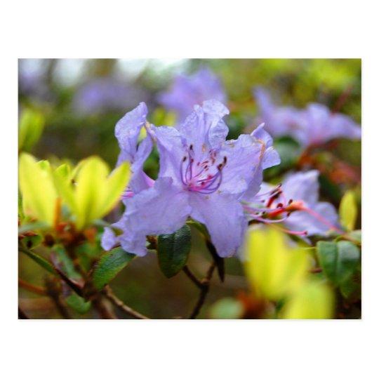 Flowers of the Scottish Highlands Postcard