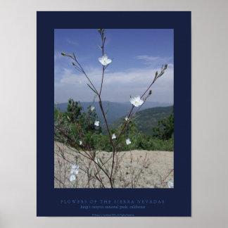 FLowers of the Sierra Nevadas Posters