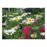 Flowers of the world photo print