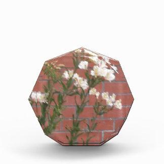 Flowers on Brick Award