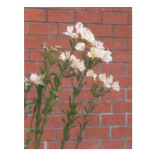 Flowers on Brick Postcard