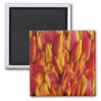 Flowers on float celebrating Queen's Day, a Refrigerator Magnet
