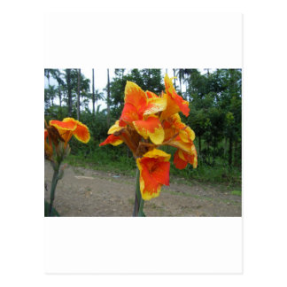 Flowers on plants, Costa Rica. Postcard