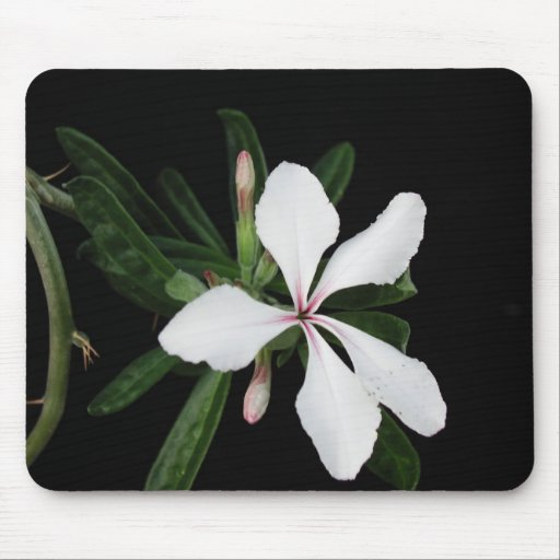 Flowers Perfect Computer Mouse Pads