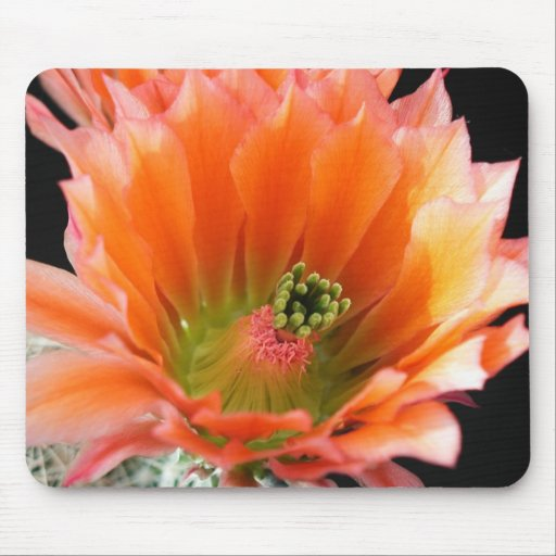 Flowers Perfect Computer Mouse Pads13 Mousepad
