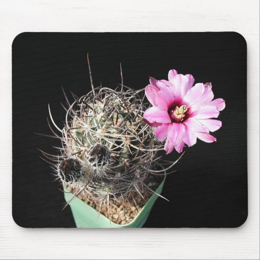 Flowers Perfect Computer Mouse Pads6 Mouse Pad