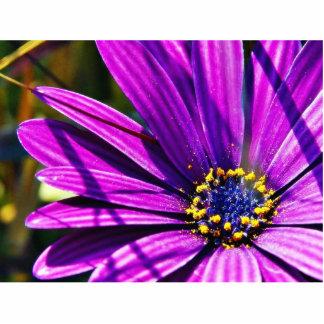 Flowers Pollen Purple Photo Cut Out