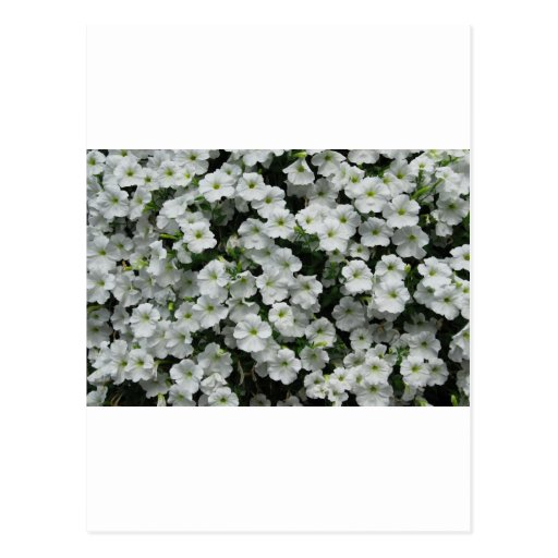 flowers post card