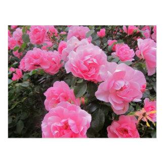 flowers postcards