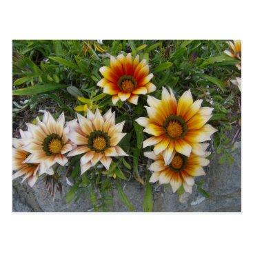 Beach Themed Flowers Postcard