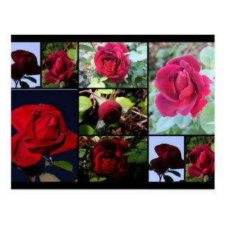Flowers(Rose) Postcard
