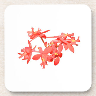 Flowers Salmon Tinted Ground Orchid Beverage Coaster