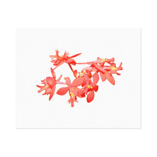 Flowers Salmon Tinted Ground Orchid Stretched Canvas Print