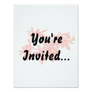 Flowers Salmon Tinted Ground Orchid Card