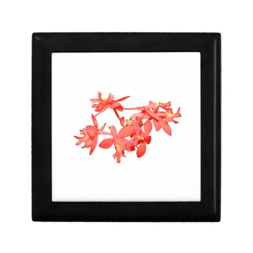 Flowers Salmon Tinted Ground Orchid Gift Boxes