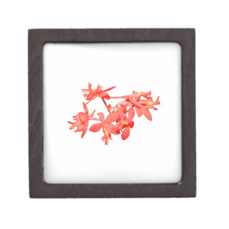 Flowers Salmon Tinted Ground Orchid Premium Gift Boxes