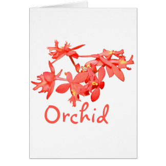 Flowers Salmon Tinted Text Ground Orchid Card