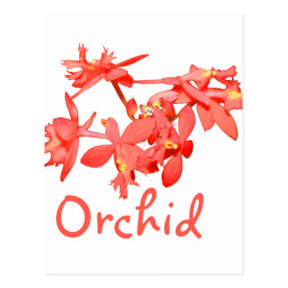 Flowers Salmon Tinted Text Ground Orchid Postcard