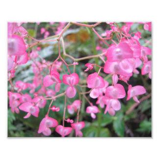 Flowers, San Diego - Photo Print
