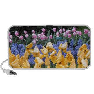 Flowers say it all tulip time at Keukenhof Travel Speakers