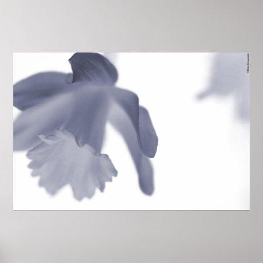 Flower's Serenity Poster