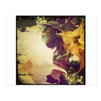Flowers To My Hummingbird Postcard