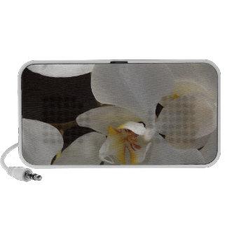 flowers- white orchid -188633.jpg iPod speakers