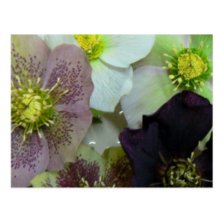 Flowery Postcard