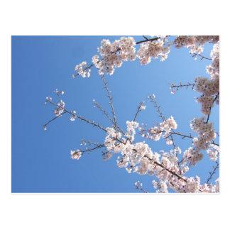 flowery tree postcard
