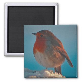 Fluffed up robin fridge magnets