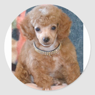Fluffy Apricot Poodle Puppy Dog Classic Round Sticker