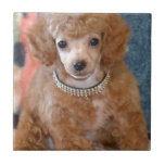 Fluffy Apricot Poodle Puppy Dog Small Square Tile