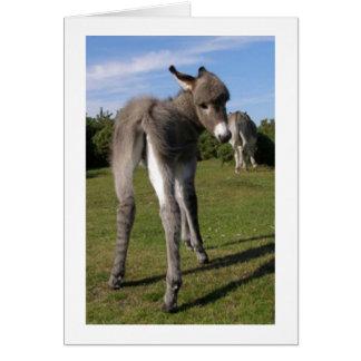 Fluffy Baby Donkey With Mama Card