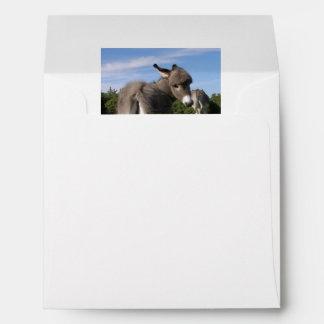 Fluffy Baby Donkey With Mama Envelope