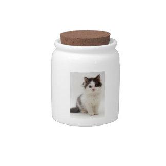 Fluffy Black & White Kitten Candy Jar