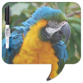 Fluffy Blue and Gold Macaw Dry-Erase Boards